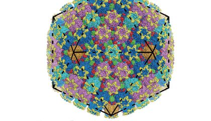 Herpes Is Kind of Beautiful, On the Molecular Level
