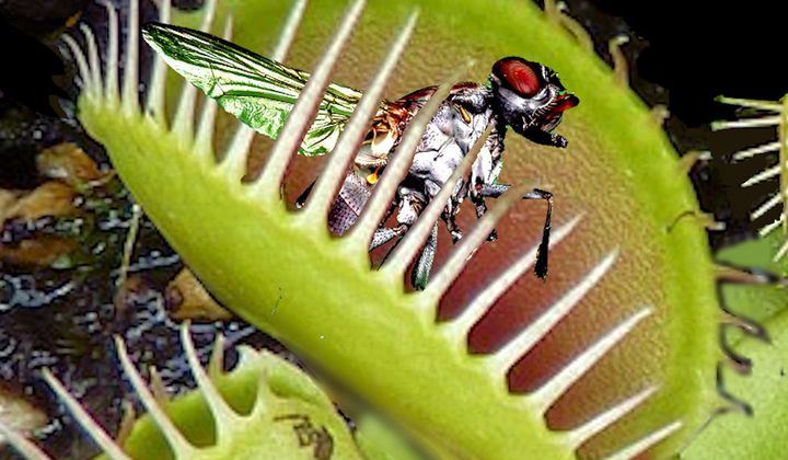 On Alien Worlds, Some Plants May be Carnivorous