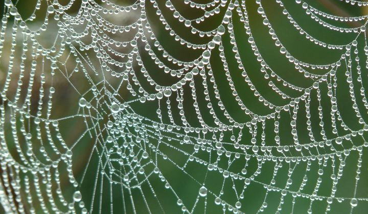 Artificial Spider Silk Is Stronger Than Steel
