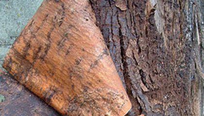 Bark on the Rocks: A Rustic Gin and Tonic Recipe