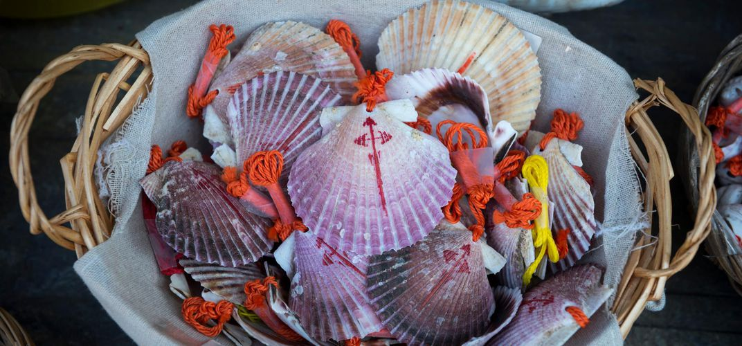 Scallop shells, symbol for the Camino de Santiago