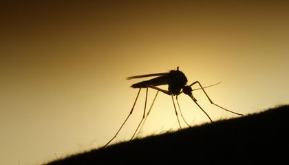 How to Regulate the Incredible Promise and Profound Power of Gene Drive Technology