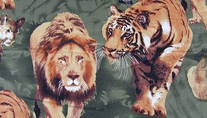 Tiger vs. Lion—Who Would Win?