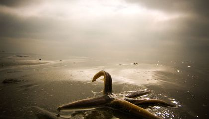 Picture of the Week—Starfish