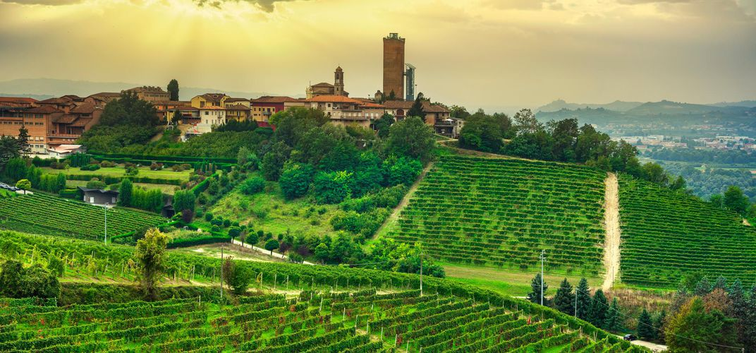 Panorama of Langhe with village and vineyard, Barbaresco