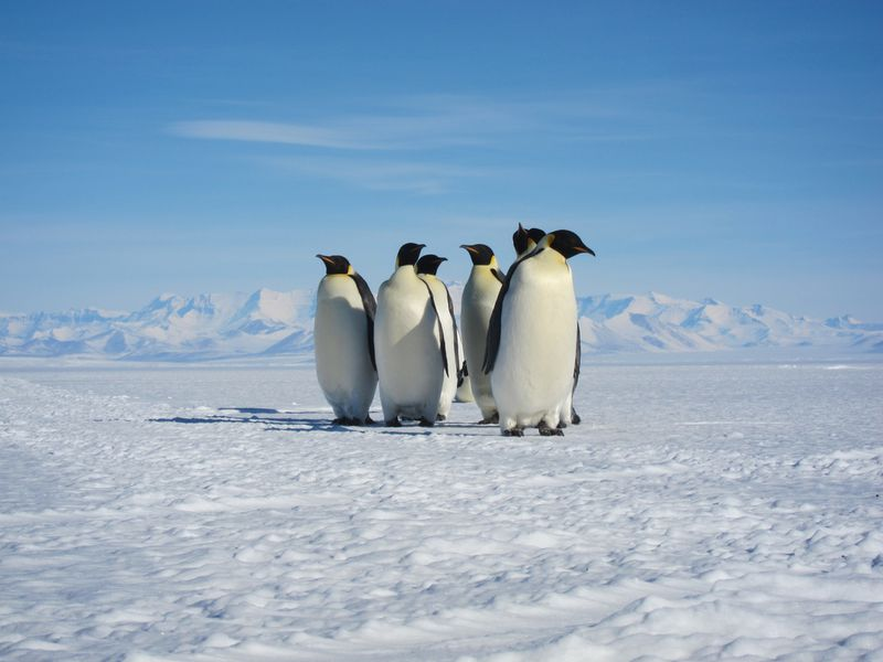 01_09_2014_penguins.jpg