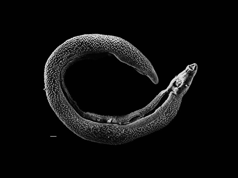 How Parasites Became So Popular Science Smithsonian