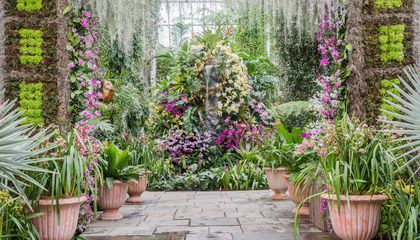 A Show of Over 6,000 Orchids Celebrates a Victorian-Era Obsession