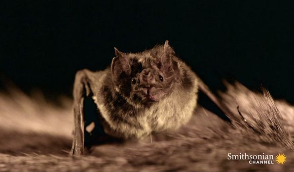 Preview thumbnail for video'The Strange Link Between Bats and Tequila