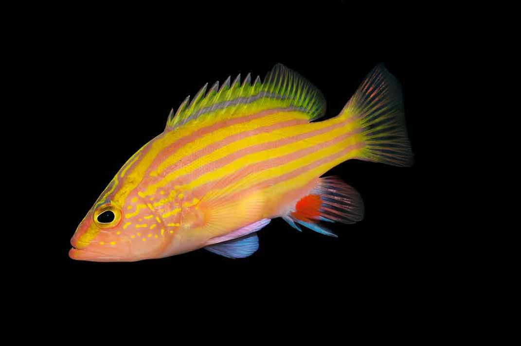 On a deep dive in a custom built submarine a new species for Fish in spanish