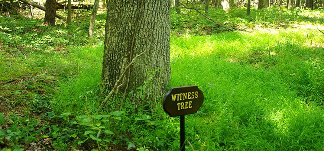 "Caption: These Five ""Witness Trees"" Were Present At Key Moments In America's History"