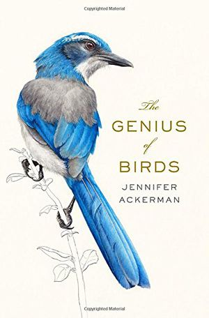 Preview thumbnail for video 'The Genius of Birds
