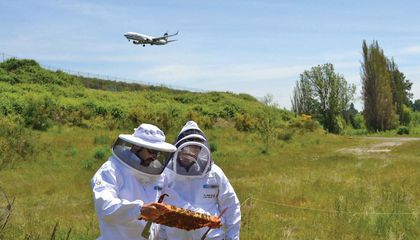 Why Some Airports Are Hiring Beekeepers