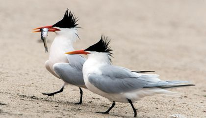 Warming and Overfishing Sent Seabirds Flocking to California