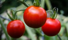 Five Ways to Eat Tomatoes