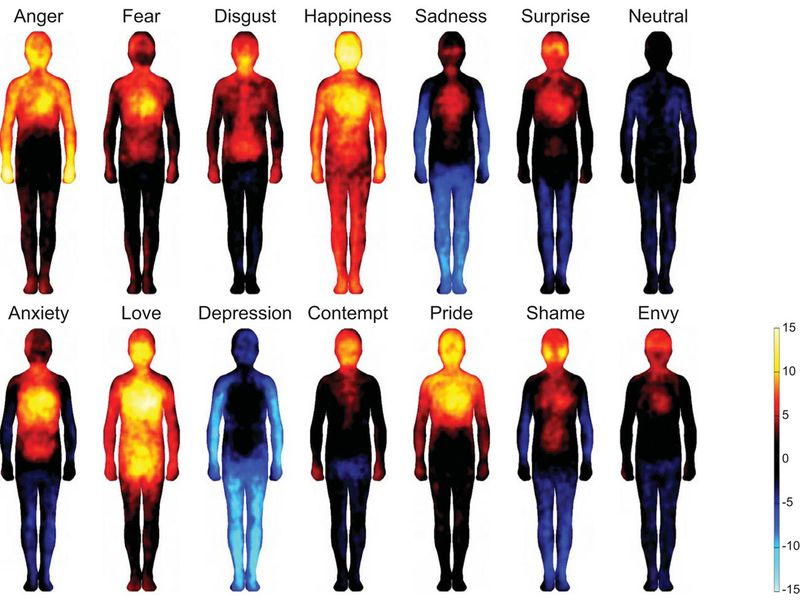 Different Emotional States Manifest In Different Spots In The Human
