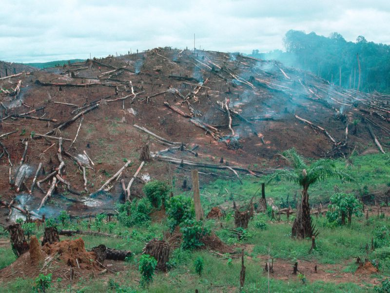 norway is paying liberia to stop deforestation smart news