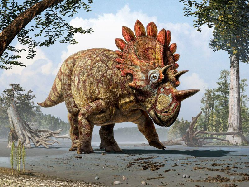 the hellboy dinosaur a new cousin of triceratops is fossil