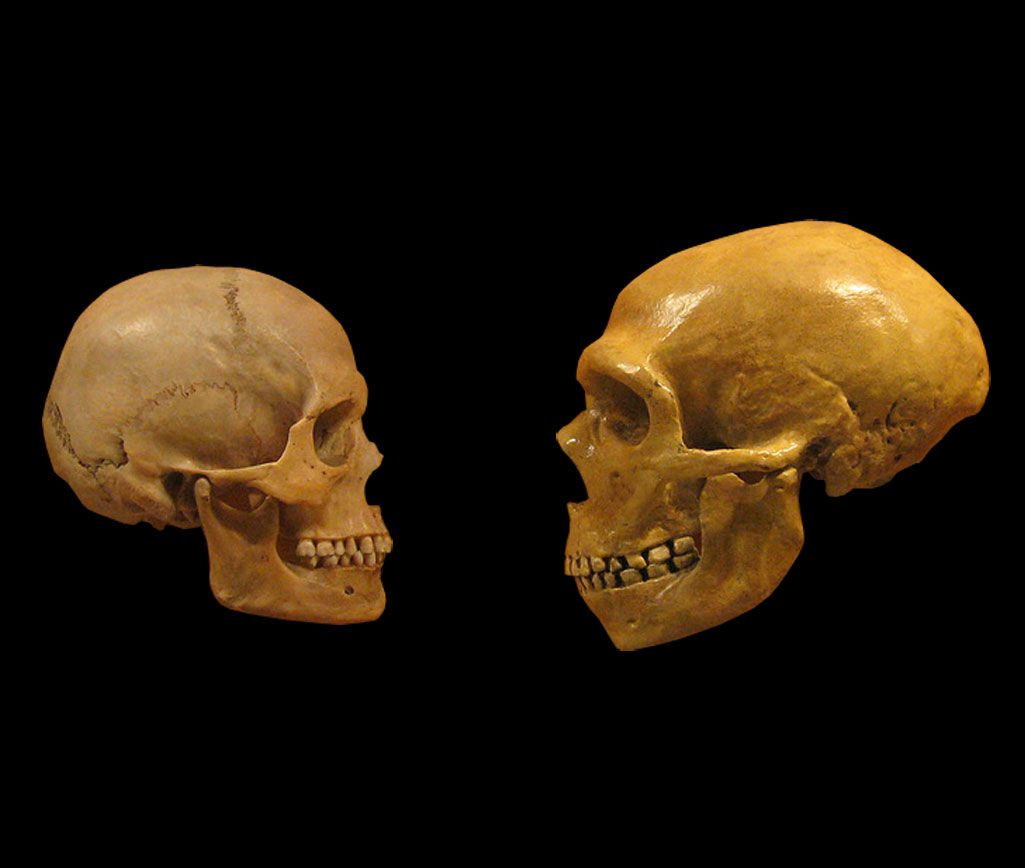 Ancient Teeth With Neanderthal Features Reveal New Chapters