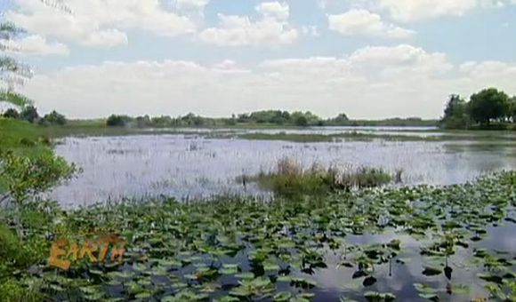 Preview thumbnail for video'Florida Everglades: Restoring the Wetlands