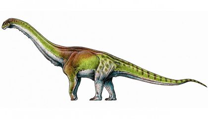 Did Scientists Just Unveil the Biggest Dinosaur of All Time?