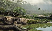 The worlds largest snake