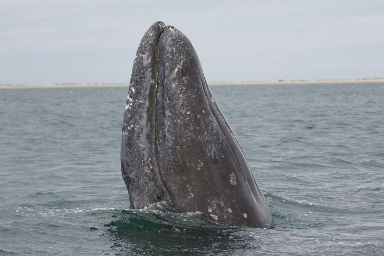 How Storms on the Sun Interfere With Whale Migration