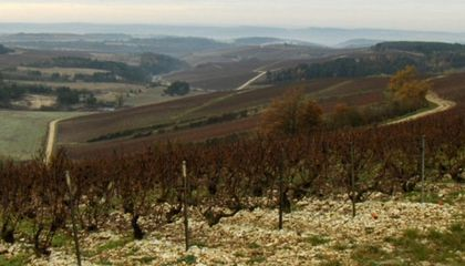 Snapshot: The Champagne Region