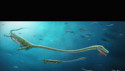 This Ancient Reptile Gave Birth to Live Offspring