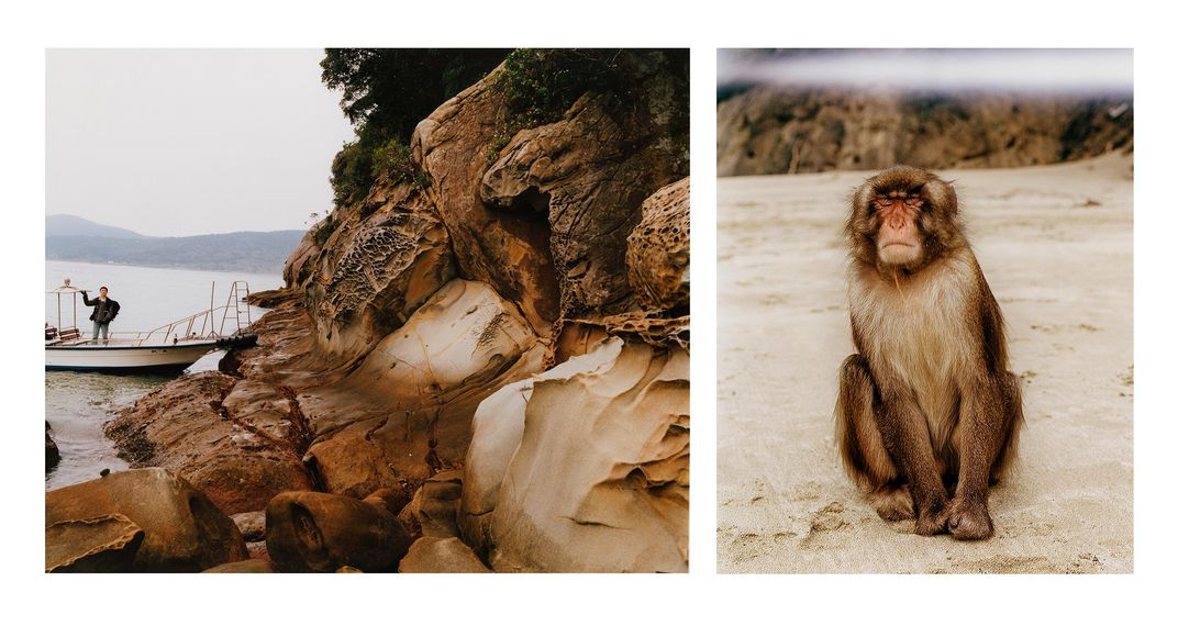 View of Koshima coast and young adult male Japanese macaque on the beach