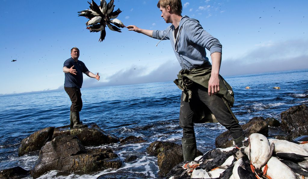 Puffin hunters on Iceland's Grímsey Island gather the day's catch.