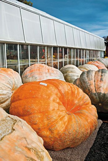 The great pumpkin science smithsonian for Parks garden center canfield ohio
