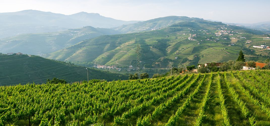Vineyards along the banks of the Douro RIver