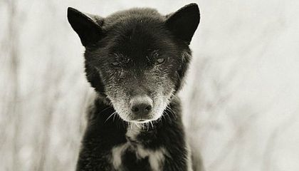 This Photographer Captures the Beauty And Dignity of Elderly Animals