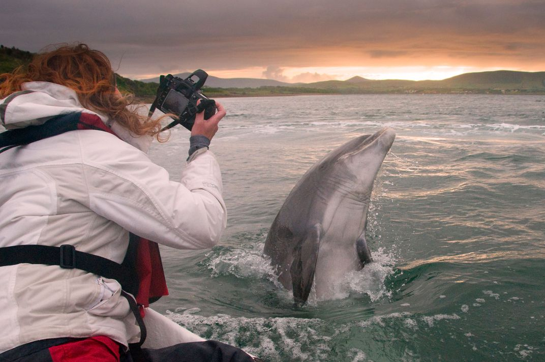 photographing Fungie the dolphin.jpg
