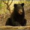 I am visited by members of The American Black Bear each summer. I love photographing them, learning about them, and sharing my photos and what I have learned.
