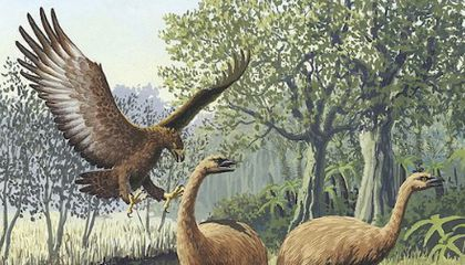 Legendary Human-Eating Bird Was Real, Probably Could Have
