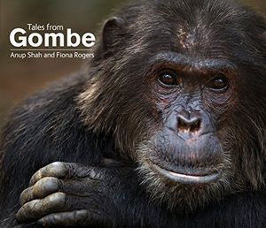 Preview thumbnail for video 'Tales From Gombe