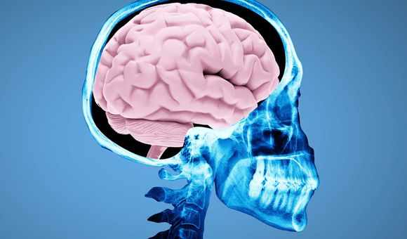 Preview thumbnail for video'Ask Smithsonian: What Happens When You Get a Concussion?
