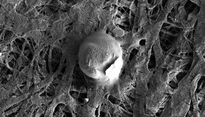 Scientists Find Life in an Antarctic Lake