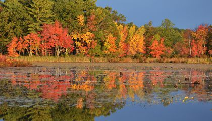 Dragged-Out Drought May Make for Fainter Fall Foliage