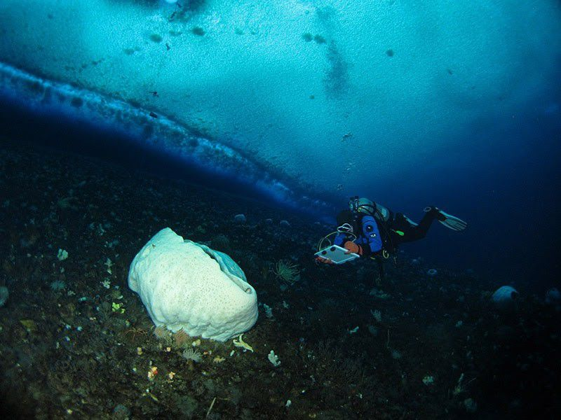 A diver photographing a white sea sponge.