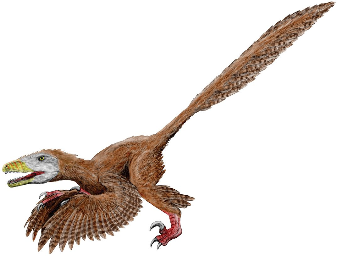 Feathered Deinonychus