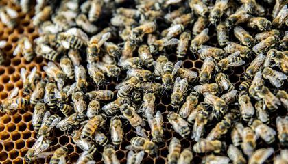 Honey Bee Virus Tricks Hive Guards Into Admitting Sick Intruders