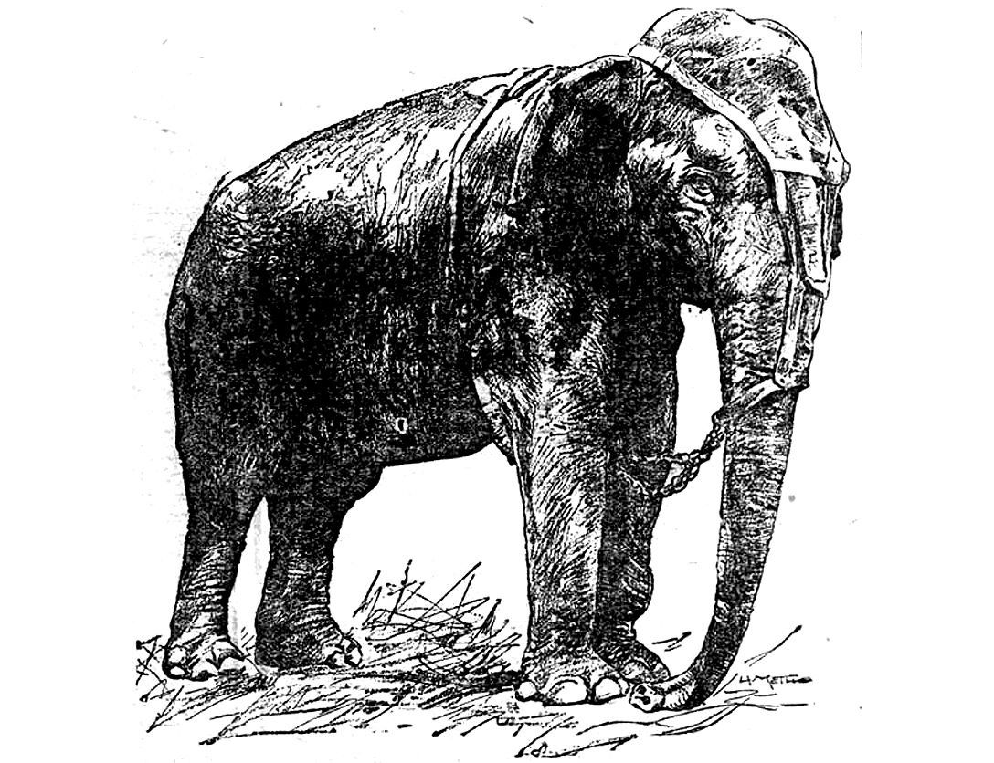 Animal Electrocuted Porn topsy the elephant was a victim of her captors, not thomas