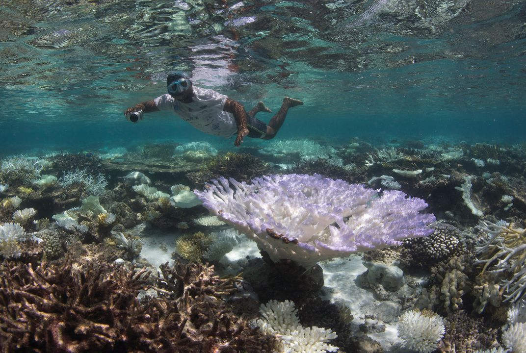 Scientists race to prevent wipeout of world's coral reefs