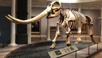 Mysteries of the First Mastodon