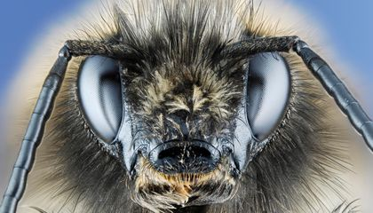 Do Insects Have Consciousness and Ego?