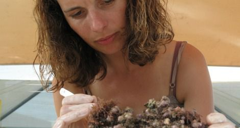 Laetitia Plaisance searches for crustaceans in a piece of dead coral.