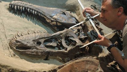 Tyrannosaurs Dominated Their Cretaceous Ecosystems